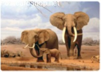 Elephant Family 3D Postcard