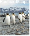 Four Penguins 3D Postcard