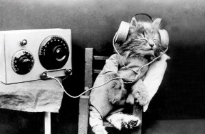 Music Lover Cat Postcard