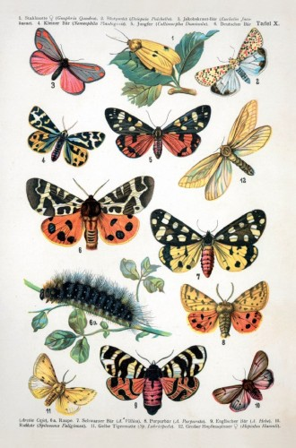 European Butterfly Postcard
